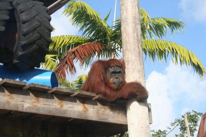 Jungle Island and Monkey Jungle