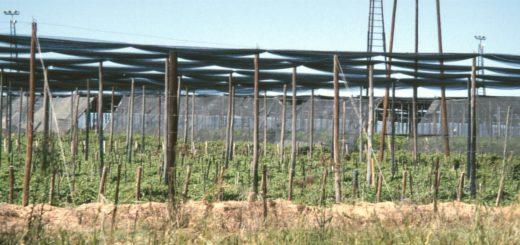 Zimbabwe Commercial farm