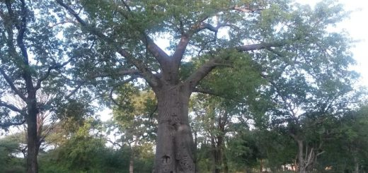 Zimbabwe Vegetation in the lowlands