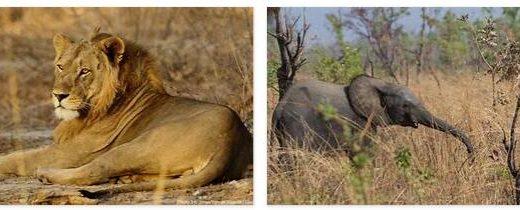 Burkina Faso Wildlife