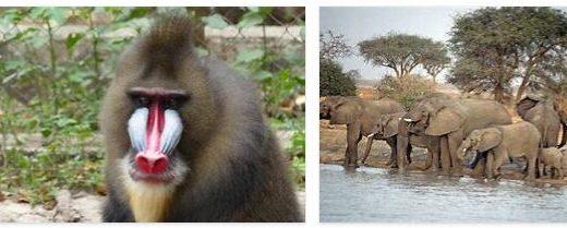 Cameroon Animals
