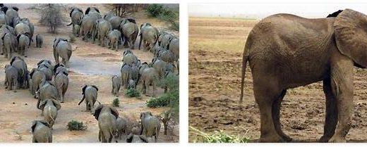 Mali Wildlife