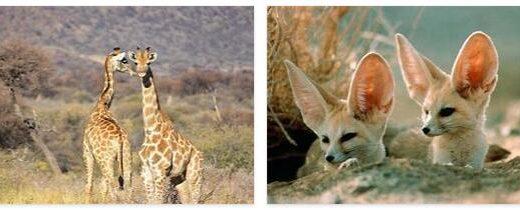 Morocco Wildlife