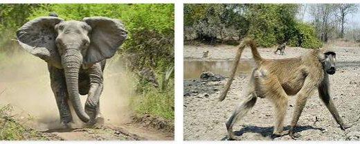 Mozambique Wildlife