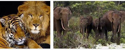 Nigeria Wildlife
