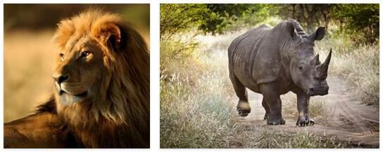 Senegal Animals