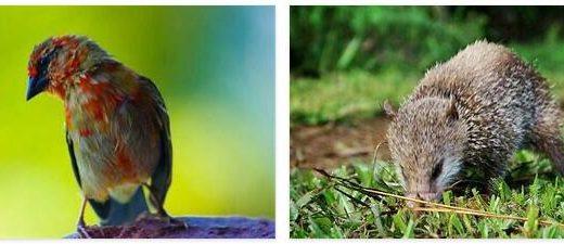 Seychelles Animals