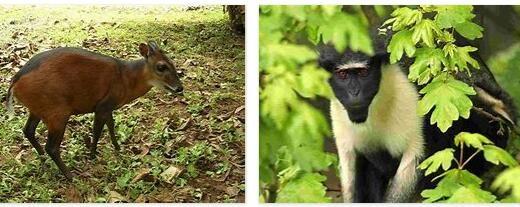 Sierra Leone Animals