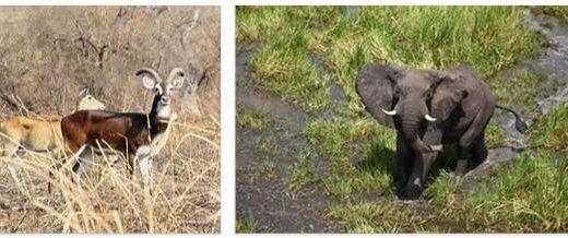 South Sudan Wildlife